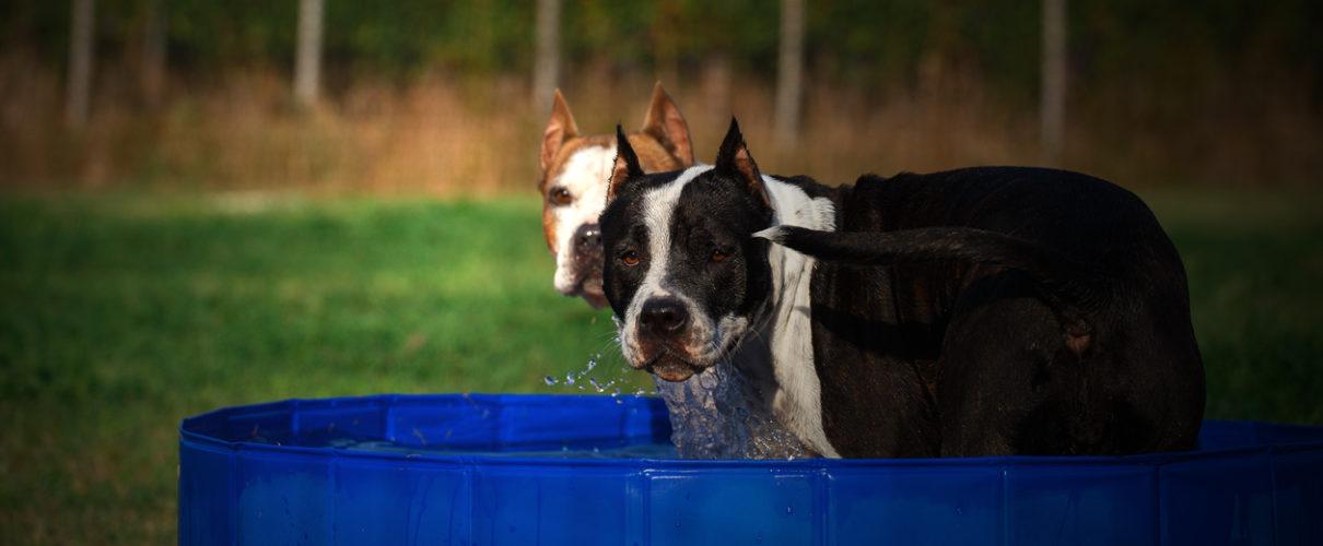 Se non puoi tenere un cane non prenderlo. Se stai bene senza un cane non prenderlo. E solo quando non puoi vivere senza un cane — prendilo!
